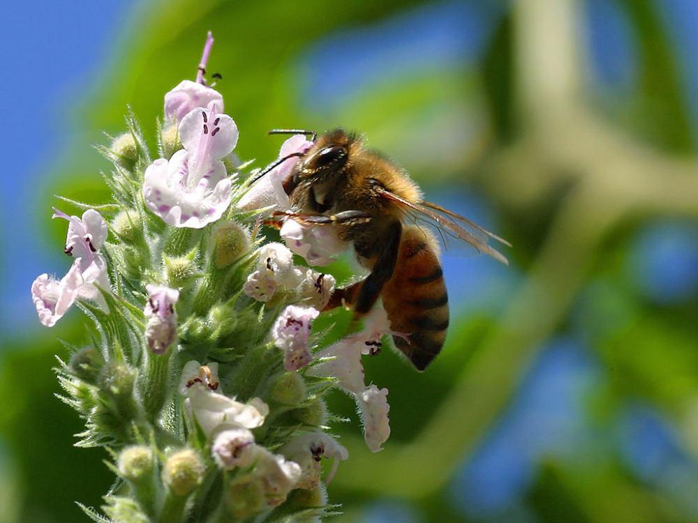 En Frutas Colomina nos preocupa la extinción de las abejas (3/4)